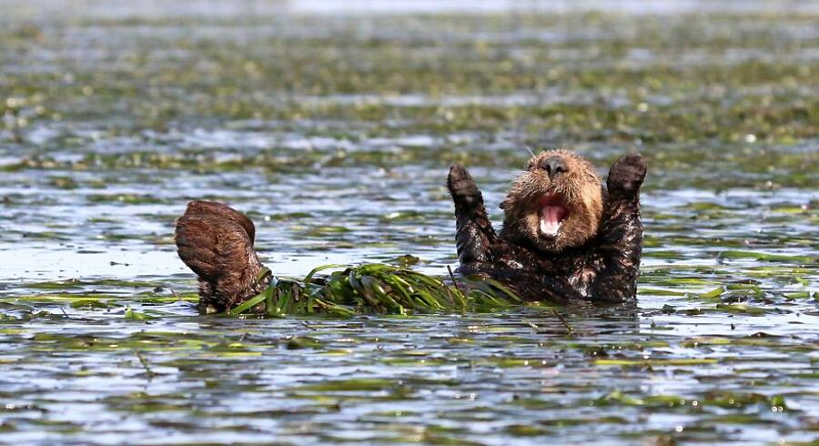 Foto Vincitrici The Comedy Wildlife Photography Awards 2017