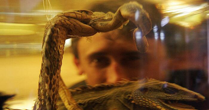 Vino Di Serpente