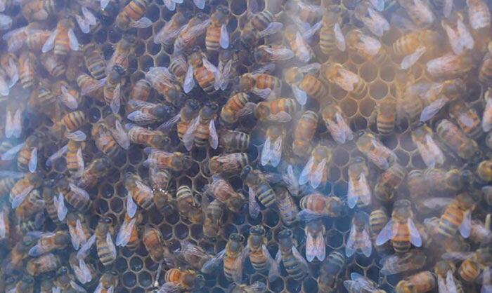Alveare trasparente Beecosystem