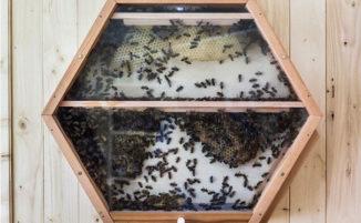 Un alveare che ci permette di vedere come lavorano le api al suo interno