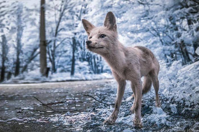 Fotografo cattura bellissime foto a infrarossi di Chernobyl