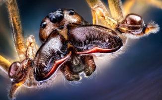 Foto ravvicinate di insetti che sembrano gli alieni di un film di fantascienza