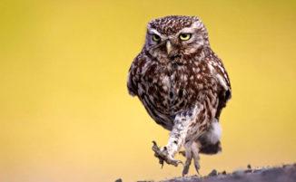 100 incredibili foto di gufi e altri uccelli rapaci notturni