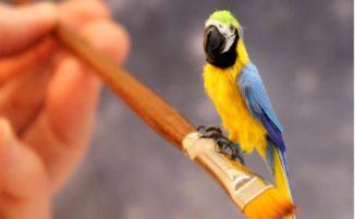 Artista crea figure di animali in miniatura incredibilmente ricche di dettagli