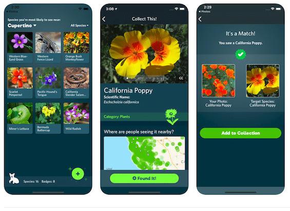 Applicazione Identifica Piante E Animali Seek iNaturalist