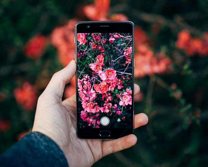Una app gratuita che identifica piante e animali nelle tue foto