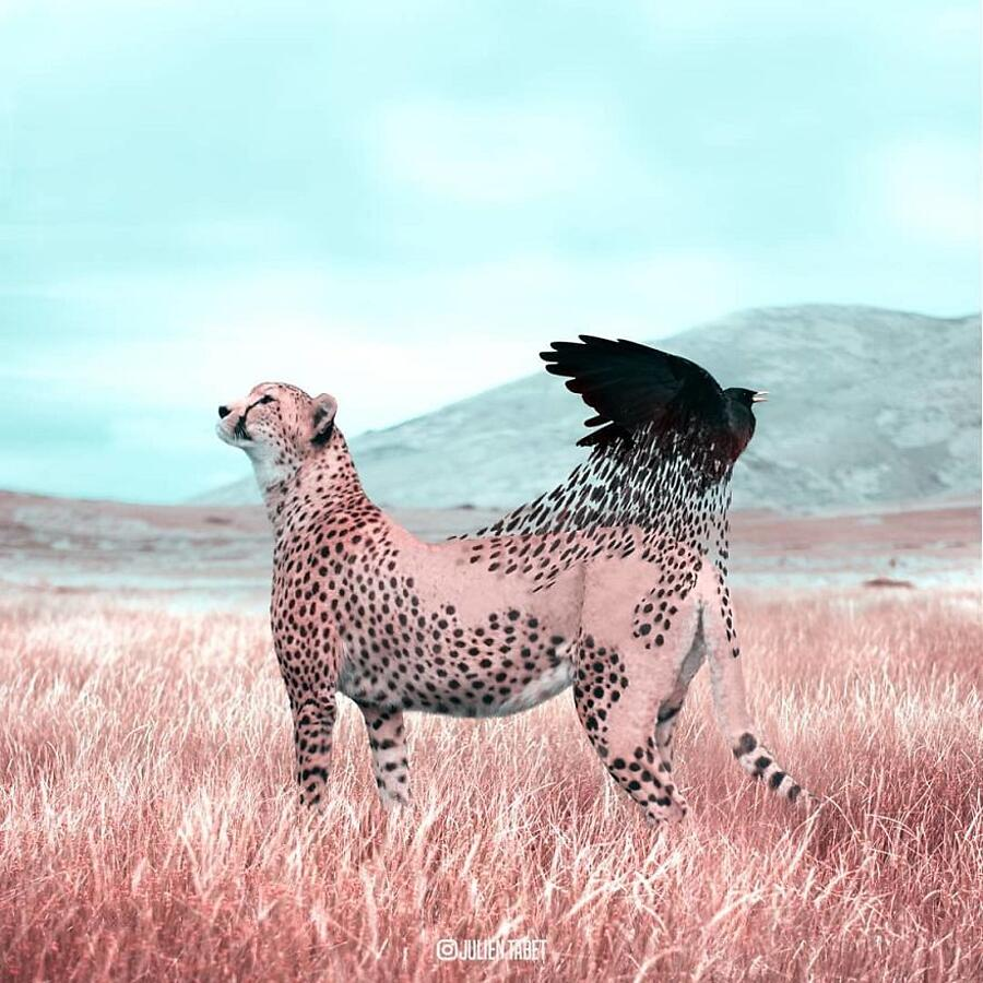 Animali Surreali Arte Digitale Julien Tabet