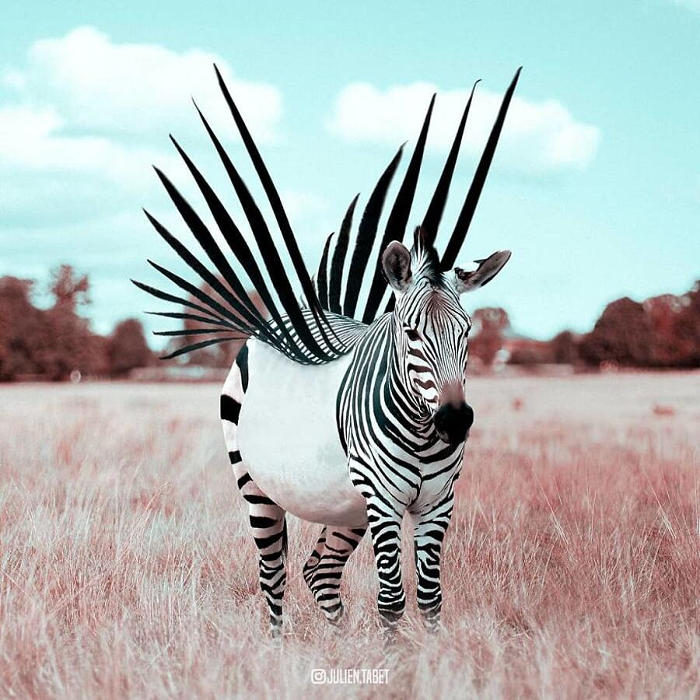 Artista francese usa abilmente Photoshop per creare animali fantastici, e il risultato è sorprendente