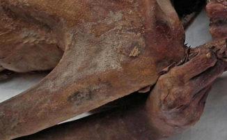 Scoperti i tatuaggi più antichi del mondo su mummie di 5000 anni fa, le foto