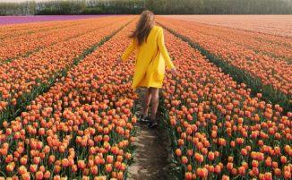7 milioni di fiori colorati nei Paesi Bassi è uno degli spettacoli più straordinari