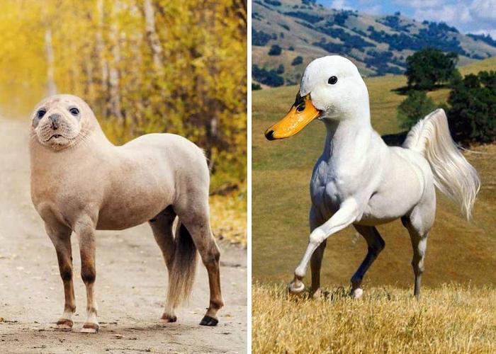Artista crea strani animali ibridi utilizzando Photoshop