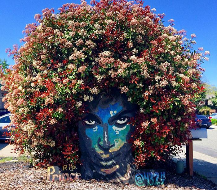 Artista trasforma un cespuglio in fiore in un ingegnoso tributo a Prince
