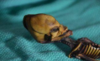 """L'identità dello scheletro """"alieno"""" di Atacama rivelata da test genetici"""