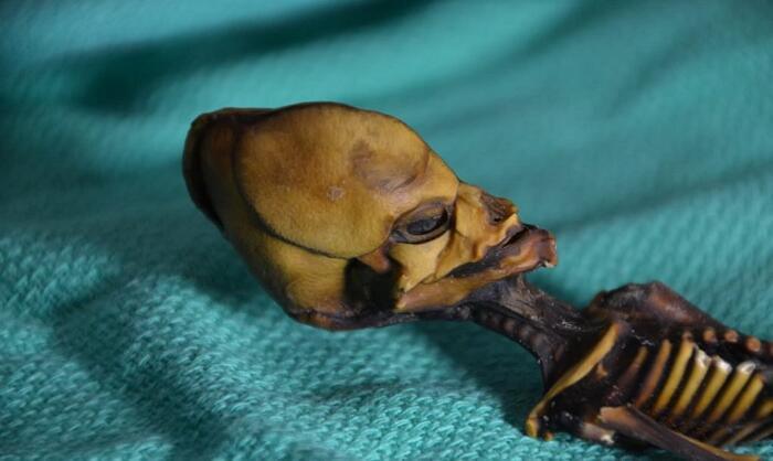 "Lo scheletro ""alieno"" di Atacama"