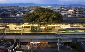 Stazione ferroviaria giapponese viene costruita intorno ad un albero di 700 anni