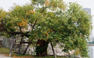 Hibaku Jumoku: gli alberi che sopravvissero alla bomba nucleare su Hiroshima