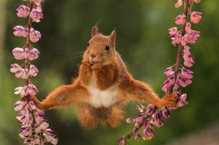 Animali buffi e divertenti dal Comedy Wildlife Photography Awards 2018