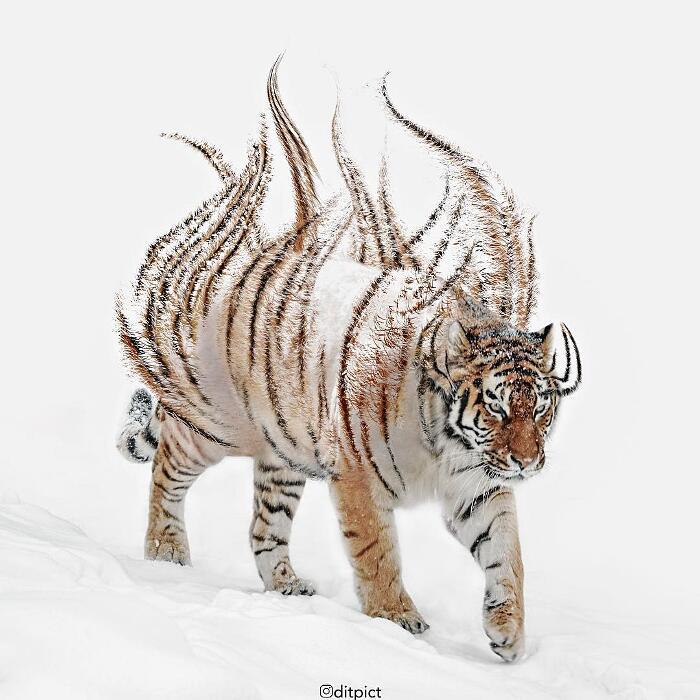 Animali Digitali Aditya Aryanto