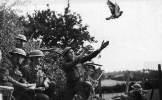 Cher Ami, il piccione che salvò 200 uomini durante la Seconda Guerra Mondiale
