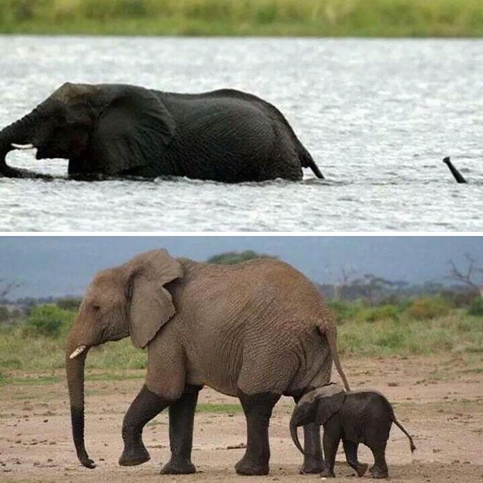 Elefantini, elefanti cuccioli adorabili