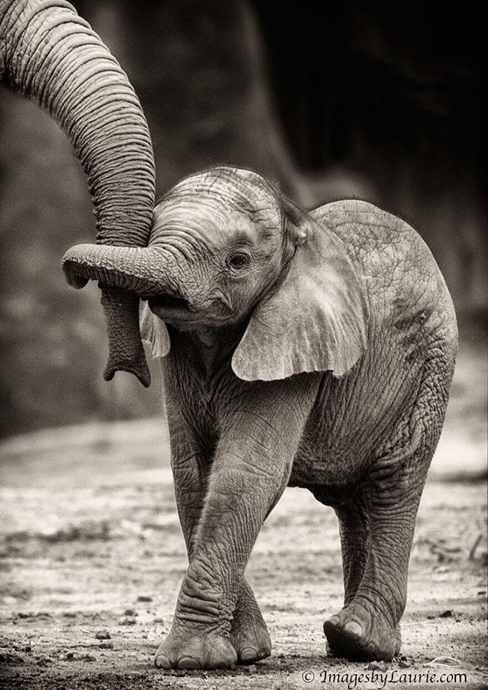 76 elefantini cosi graziosi che vi faranno innamorare