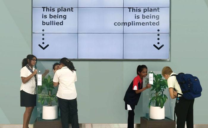 Esperimento IKEA mostra che succede se bullizzi una pianta per 30 giorni e il risultato è scioccante