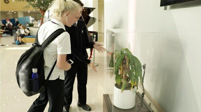 Esperimento IKEA bullismo sulle piante