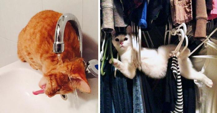 90 foto di gatti divertenti colti in situazioni davvero imbarazzanti