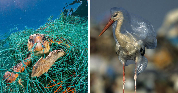 National Geographic organizza una campagna shock contro i danni della plastica nell'ambiente