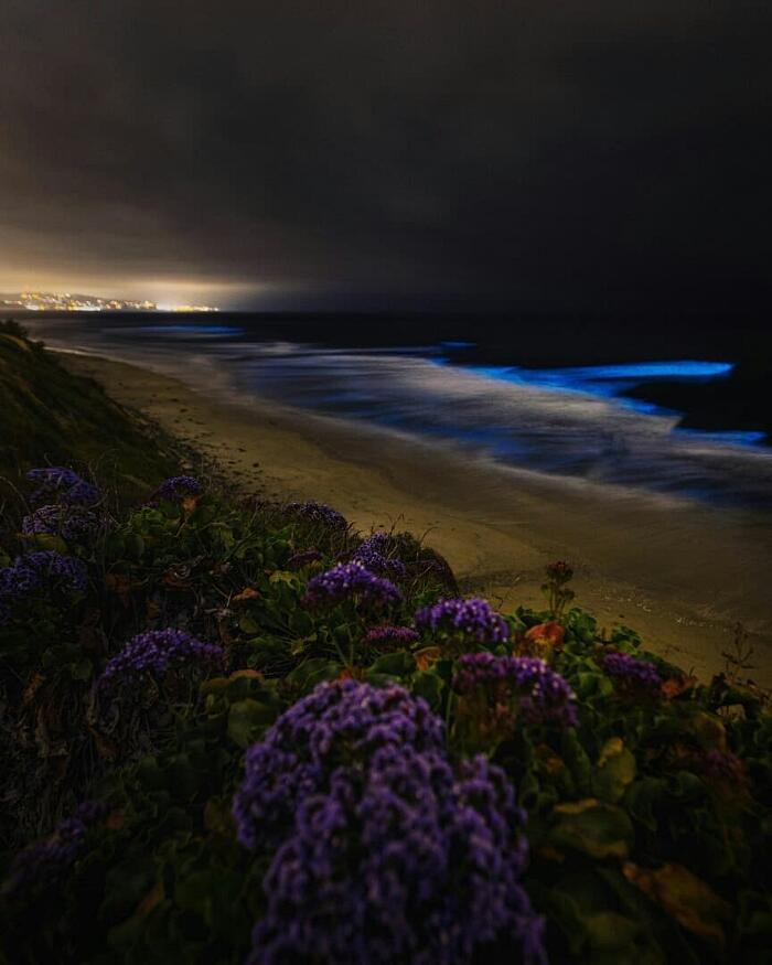 Bioluminescenza Plancton San Diego California