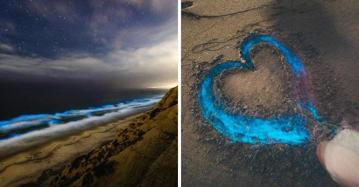 Un fenomeno naturale accende di notte le spiagge di San Diego di un blu incandescente