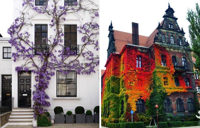 16 esempi di piante che hanno trasformato degli edifici in luoghi da fiaba