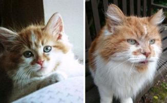 Prende un gattino nel 1988 e quest'anno incredula festeggia il suo 30esimo compleanno