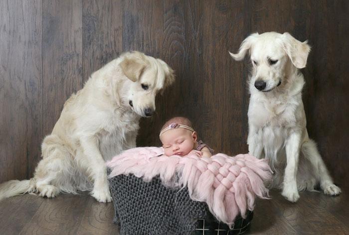 Bambina 15 mesi Amica di Golden Retriever Chloe