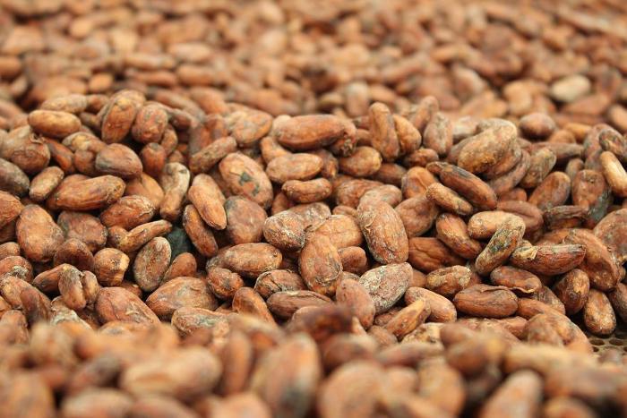 Ecco come si produce il cioccolato, dalla pianta del cacao al prodotto finito