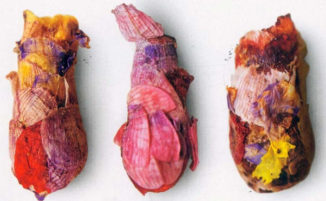 Un'ape molto rara crea nidi che sembrano opere d'arte