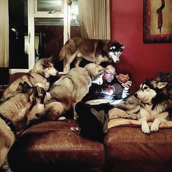 Cani divertenti e affamati supplicano per avere un po' di cibo