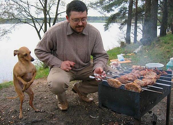 Cani divertenti e affamati chiedono da mangiare