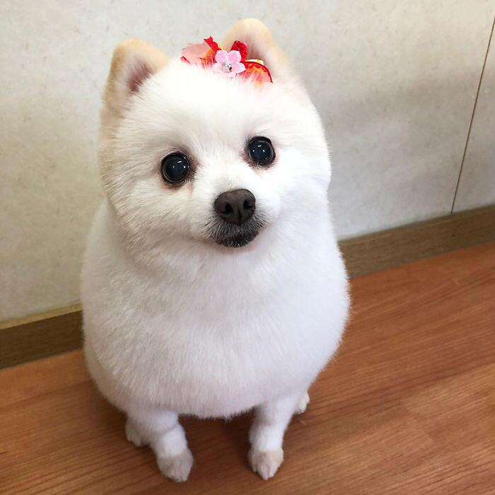 Toeletta Cani Prima E Dopo Yoriko Hamachiyo