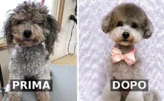 Adorabili cagnolini prima e dopo la toeletta