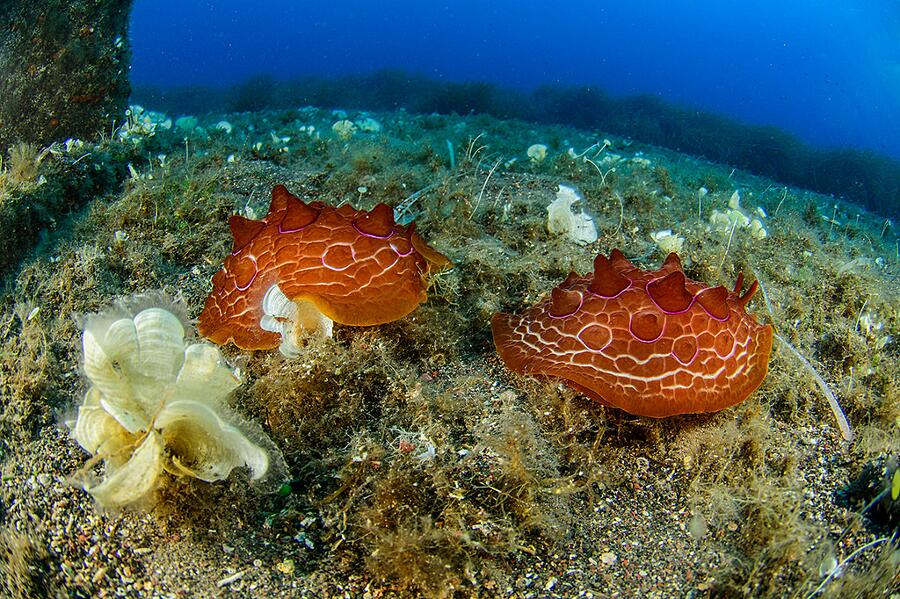 Foresta Coralli Sicilia Oceana