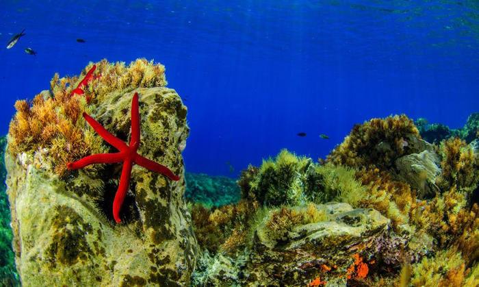 Una incredibile foresta di corallo circonda i vulcani sottomarini della Sicilia