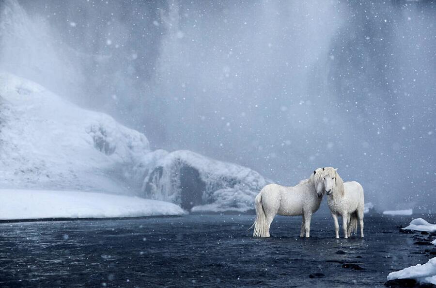 Foto Cavalli E Paesaggi Islanda Drew Doggett