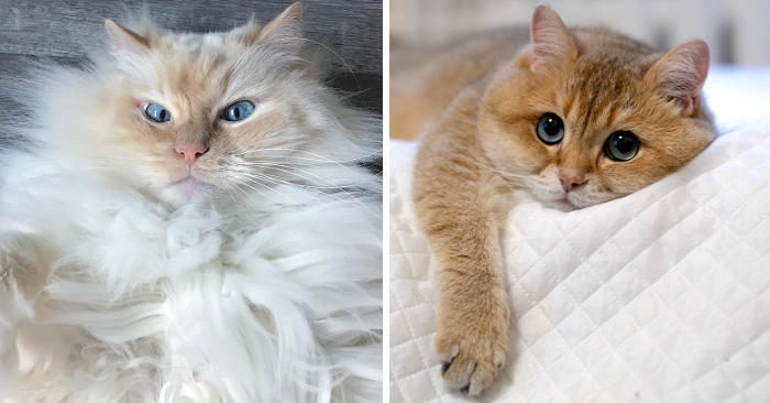 25 gatti bellissimi che ti faranno innamorare