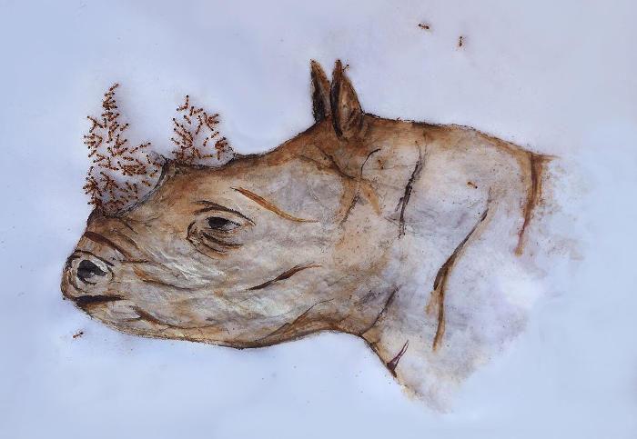 Artista completa le sue illustrazioni con formiche vive