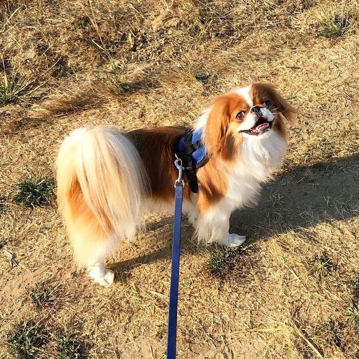 Cani piccola taglia: le 36 razze di cani piccoli perfette per l'appartamento