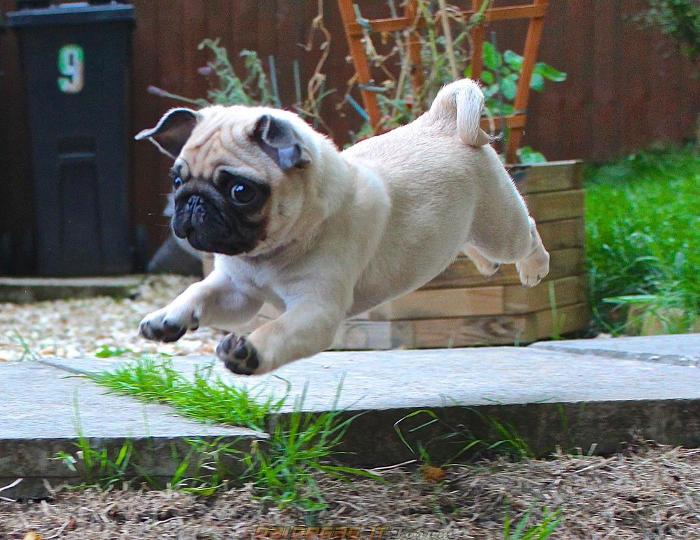 Cani piccola taglia, cani piccolissimi, cani toy, cani nani