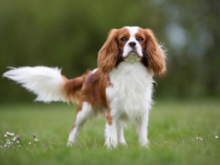Cani piccola taglia le razze di cani piccoli perfette per l