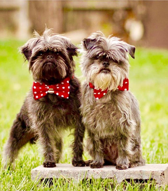 Cani Piccola Taglia Le 36 Razze Di Cani Piccoli Perfette Per L