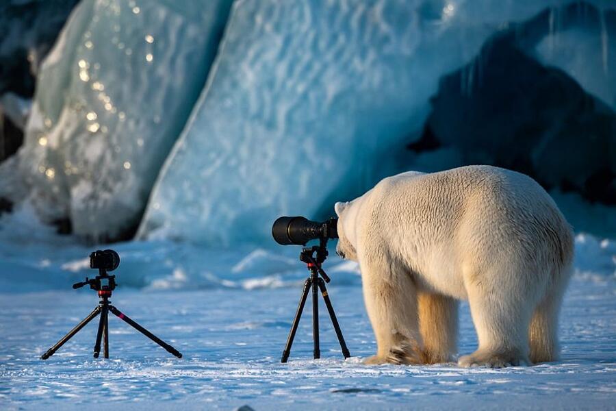 Comedy Wildlife Photography Awards 2018 Finalisti